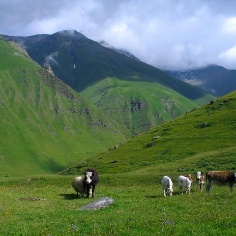 Idyllische Landschaft im Kaukasus, Georgien