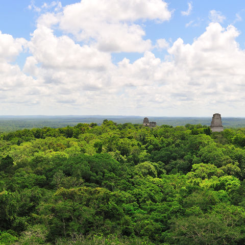 Blick über die Ruinen von Tikal, die den Regenwald durchbohren © Hugoht, Dreamstime.com