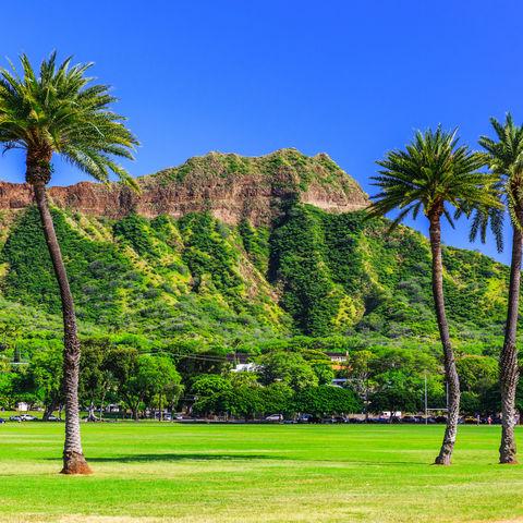 Palmen und den Diamond Head Krater im Blick in der Nähe von Honolulu, Oahu, Hawaii
