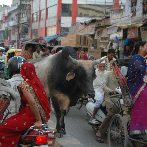 Straßenverkehr in Delhi, Indien