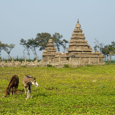 Tempel in Mahabalipuram, Indien