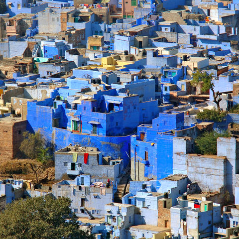 Blaue Häuser in Jodhpur, Indien