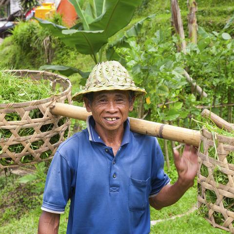 Freundlicher Reisbauer, Indonesien