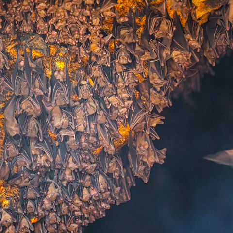 Im Fledermaustempel Goa Lawah, Indonesien