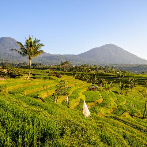 Blick auf die Reisterrassen von Jatiluwih, Indonesien