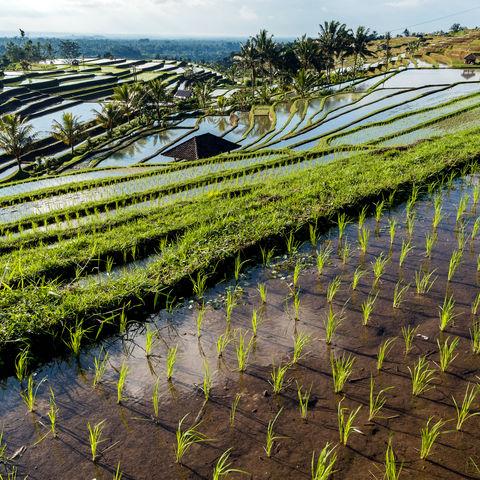 Prächtige Reisterrassen von Jatiluwih, Indonesien