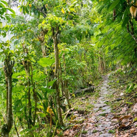 Pfad durch den Regenwald von Munduk, Indonesien