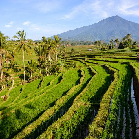 Reisterassen von Jatiluwih, Indonesien