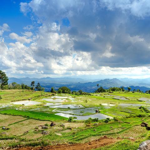 Reisfelder in Tana Toraja, Indonesien