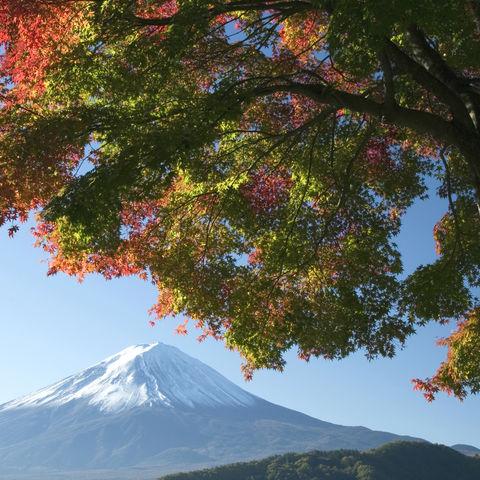 Berg Fuji im Herbst, Japan