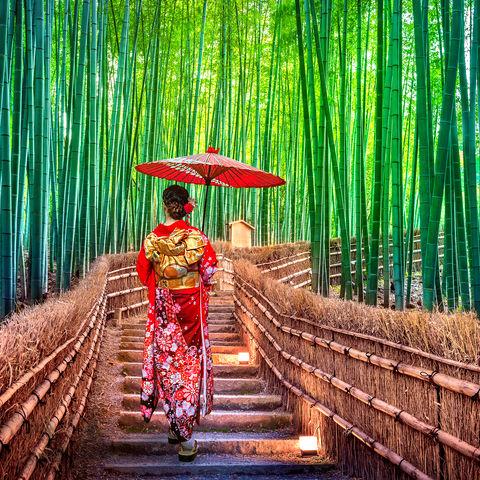 Spaziergang im Bambuswald Arashiyama, Kyoto, Japan
