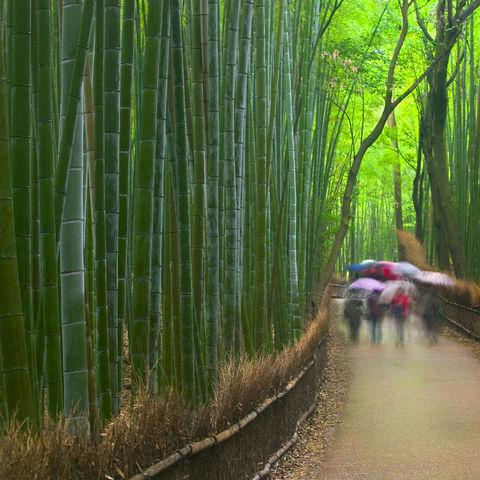 Bambuswald in Kyoto, Japan