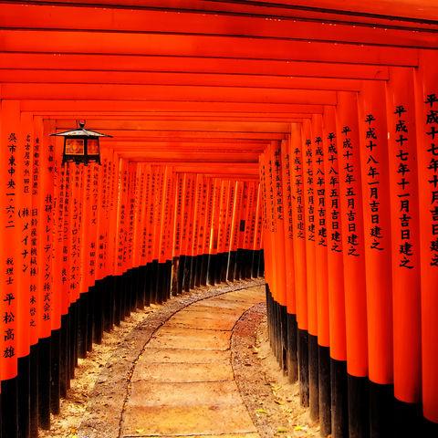 Zahlreiche Torii des Fushimi Inari Schreines in Kyoto, Japan