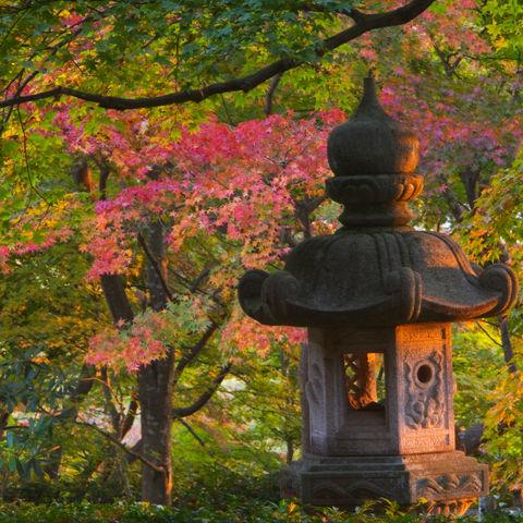 Gartentempel in Kyoto, Japan