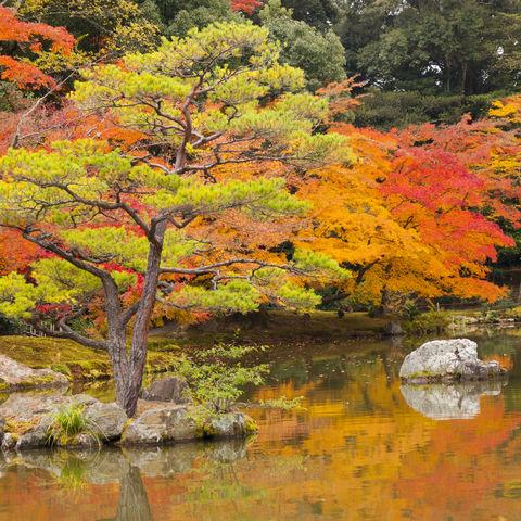 Japanischer Garten im Herbstkleid in Kyoto, Japan