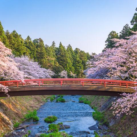 Frühlingshafte Kirschblüte: Brücke in Shizuoka, Japan