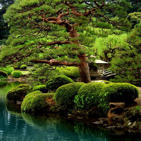 Garten in Tokio, Japan