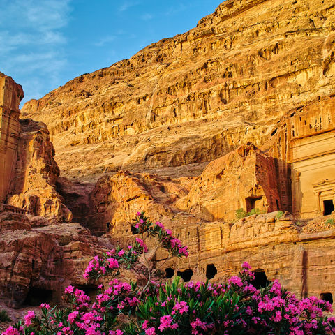 Blütenpracht in der Felsenstadt Petra im Abendhimmel, Jordanien