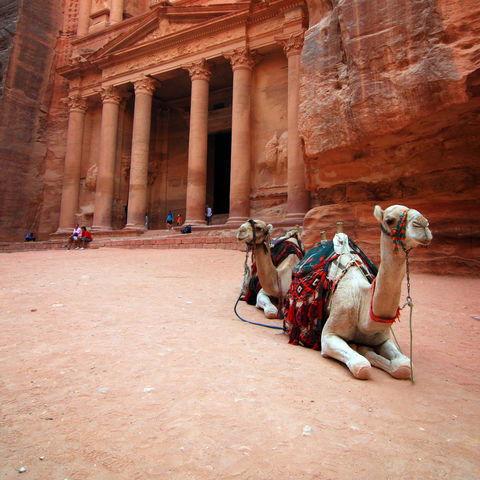Kamele vor dem Khazne al-Firaun in Petra, Jordanien