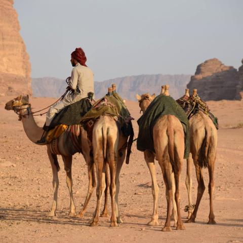 Kamele in der Wüste Wadi Rum, Jordanien