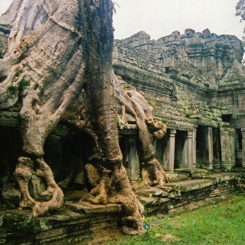 Von der Natur umschlungen: Ta Prohm Tempel, Angkor, Kambodscha