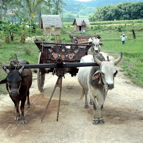 Ochsenkarren im ländlichen Kambodscha, Kambodscha