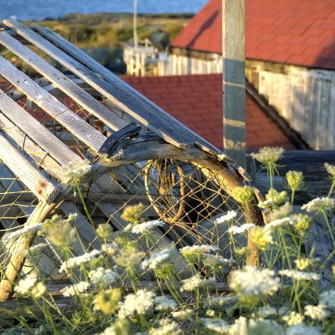 Hummerkäfig in einem kleinen Fischerdorf in Nova Scotia, Kanada