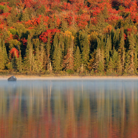 Herbststimmung im Algonquin-Nationalpark, Kanada