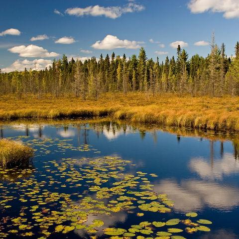 Algonquin-Park im Herbst, Kanada
