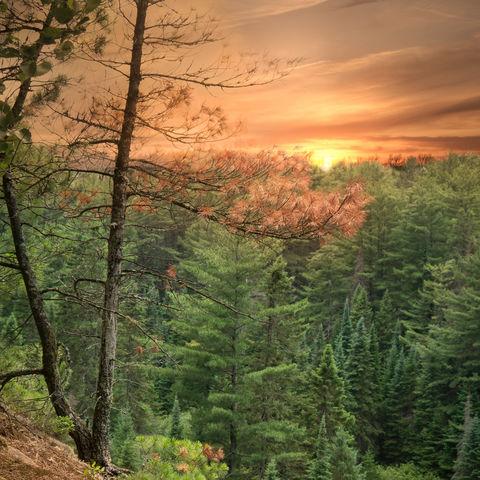 Sonnenuntergang auf dem Two Rivers Trail, Algonquin Park, Ontario, Kanada