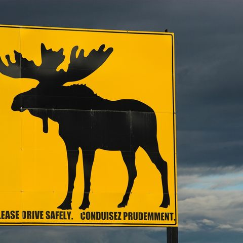 Verkehrsschild warnt vor Elchen, Kanada