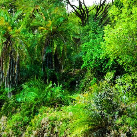 Dschungelsafari im Tsavo West Nationalpark, Kenia