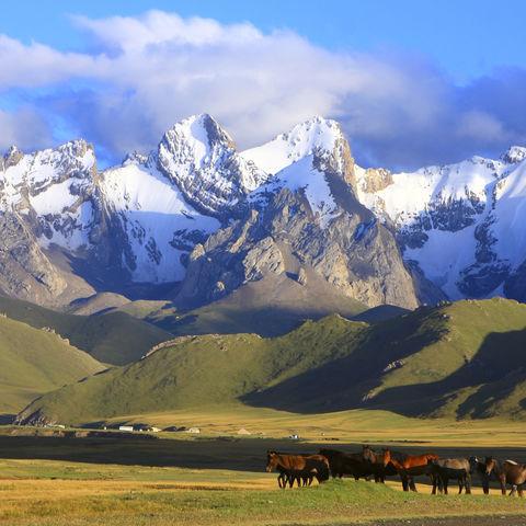 Typisches Bild in Kirgistan: Natur satt!, Kirgistan