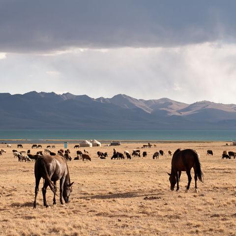 Pferdeherde auf Weideland am See, Kirgistan