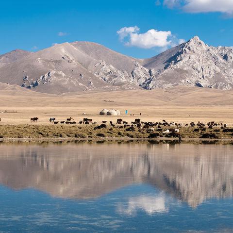 Pferde und Schafe am Son-Kul See, Kirgistan