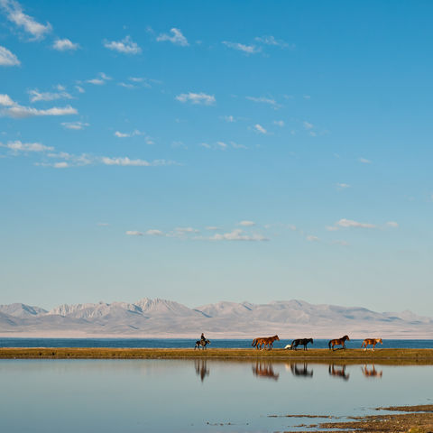 Wildpferde am Son-Kul-See, Kirgistan