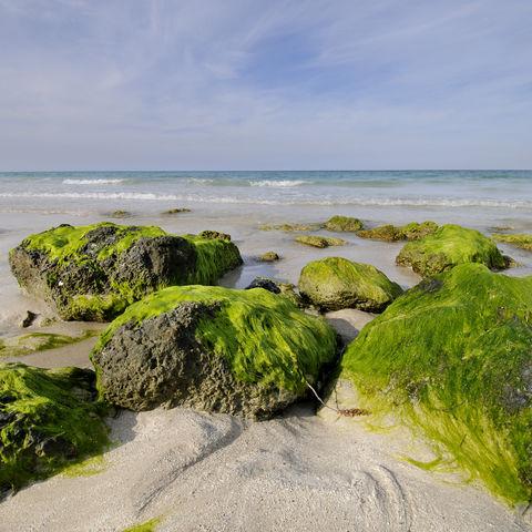 Steine am Strand von Santa Maria, Kuba