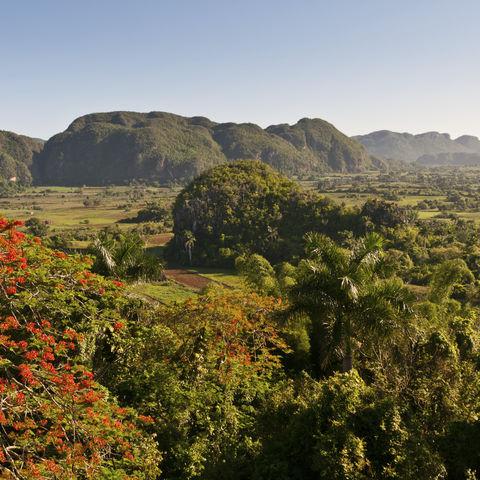 Fruchtbares Viñales-Tal, Kuba