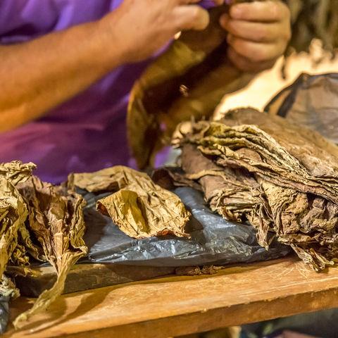 Beim Zigarren herstellen zuschauen: Viñales, Kuba