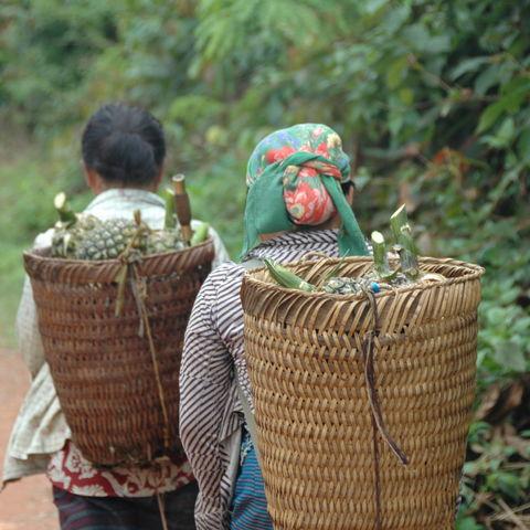 Laotische Frauen mit ihrer Ernte, Laos