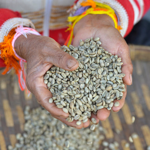 Schon getrocknet: Kaffeebohnen in Paksong, Bolaven Plateau, Laos
