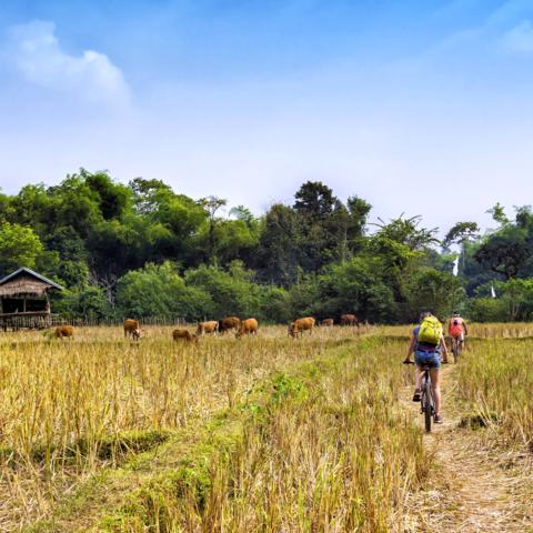 Eine Spritztour mit dem Fahrrad in der Umgebung von Vang Vieng, Laos