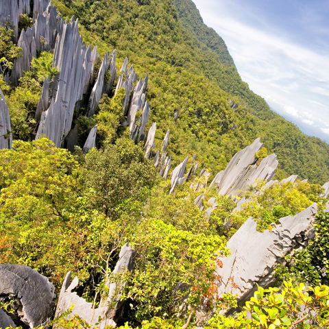 Pinnacles im Mulu Nationalpark, Malaysia