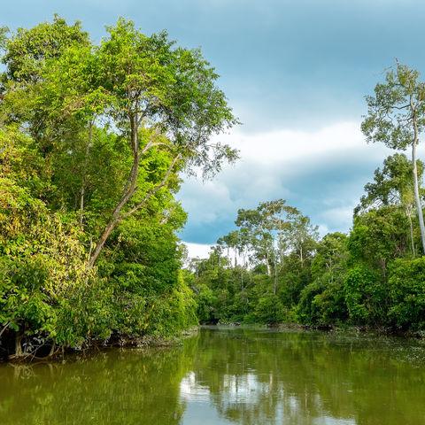 Flusssafari auf dem Kinabatangan im dichten Regenwald, Sabah, Borneo, Malaysia