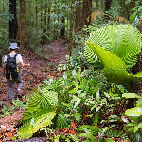 Wanderer im Bukit Lambir Nationalpark, Sarawak, Borneo, Malaysia
