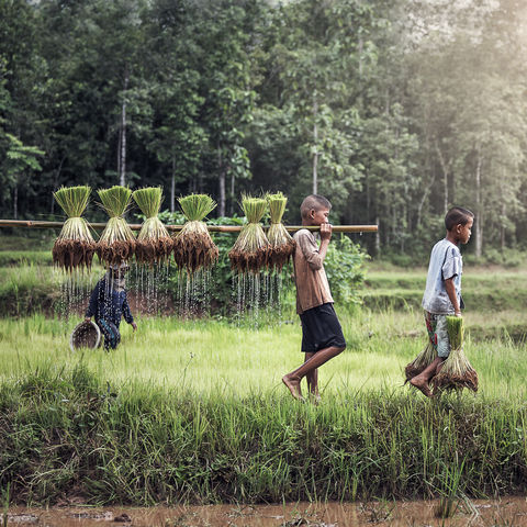 Farmerkinder auf dem Land © Sasin Tipchai, Dreamstime.com