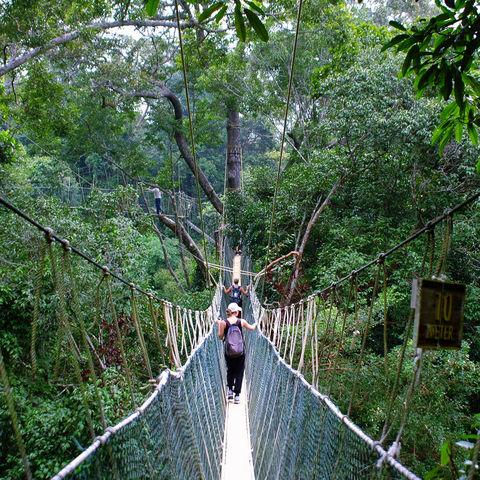 Hängebrücke im Taman-Negara-Nationalpark, Malaysia