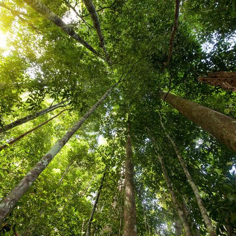 Regenwald auf der Insel Tioman, Malaysia