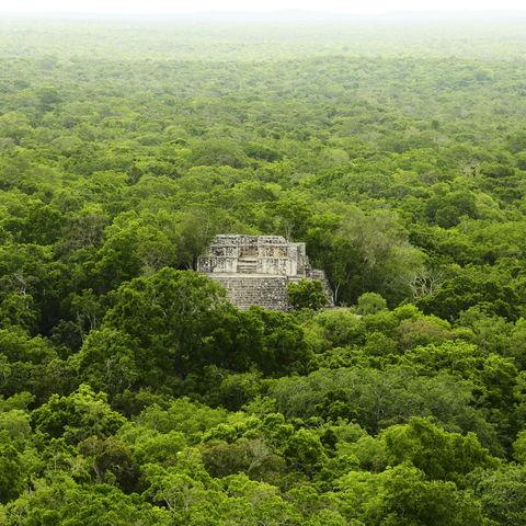 Vom Dschungel verschlungene Maya Ruinen Calakmul, Yucatán, Mexiko