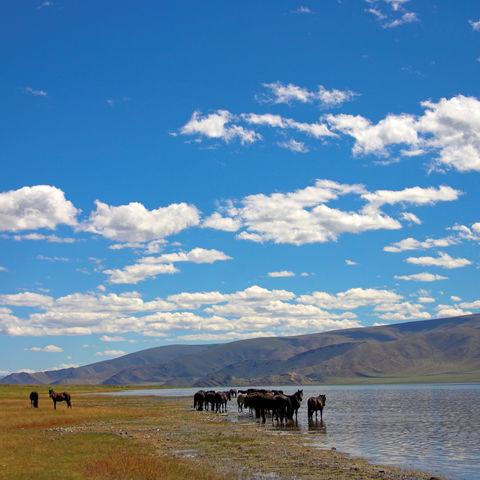 Pferde trinken an einem See, Mongolei